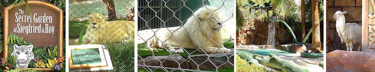 Lions_BEy
